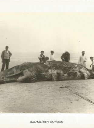147 Cachalote varado en la segunda playa